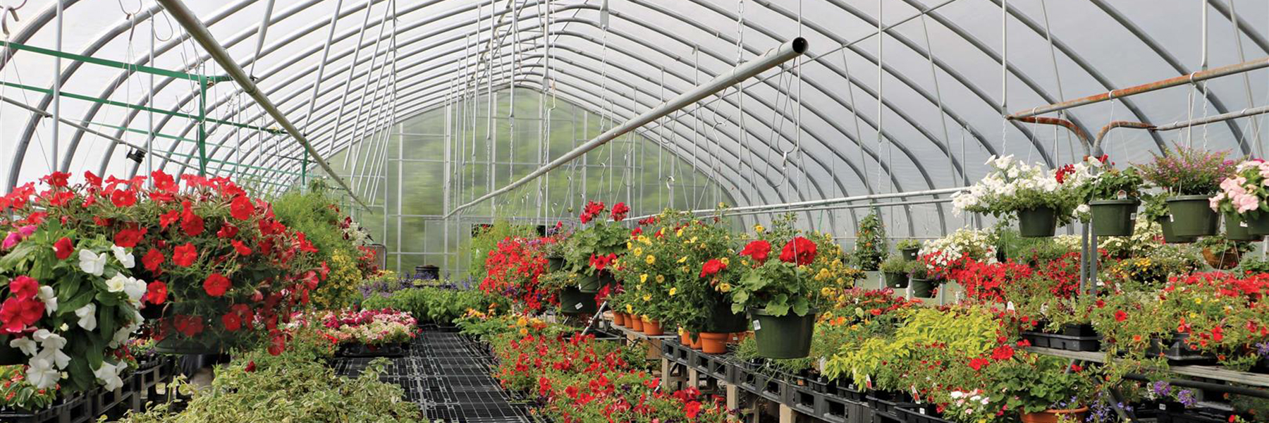 nursery greenhouse flowers