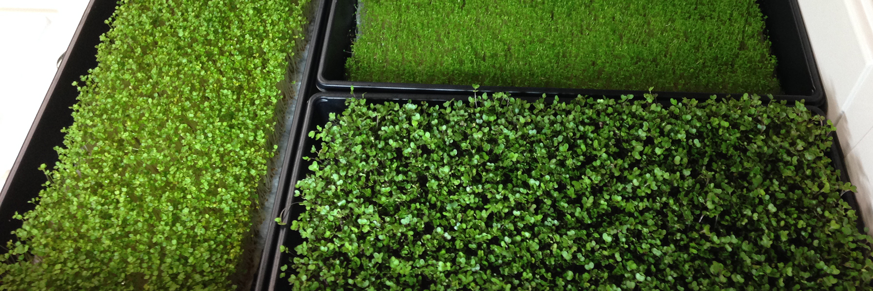 microgreen systems