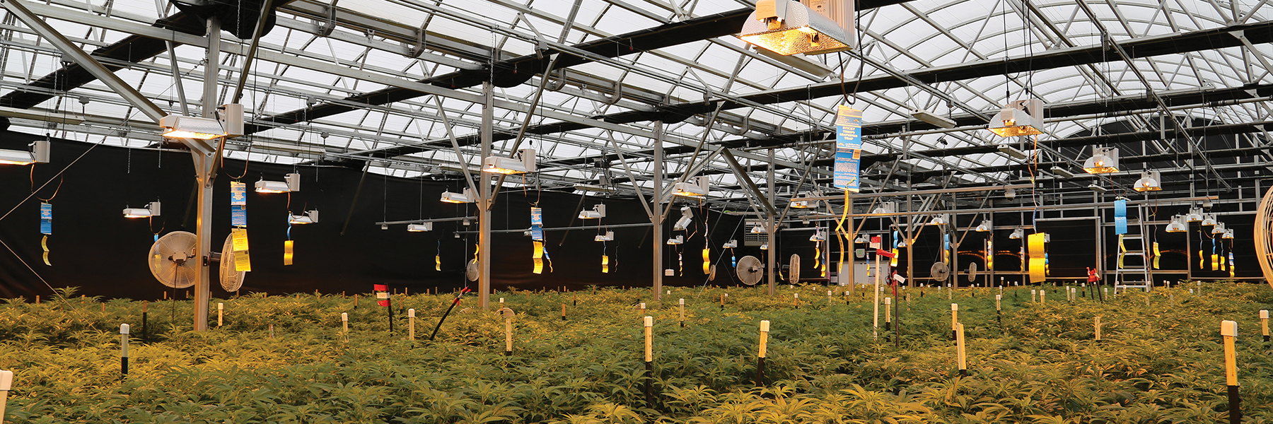 light deprivation greenhouses
