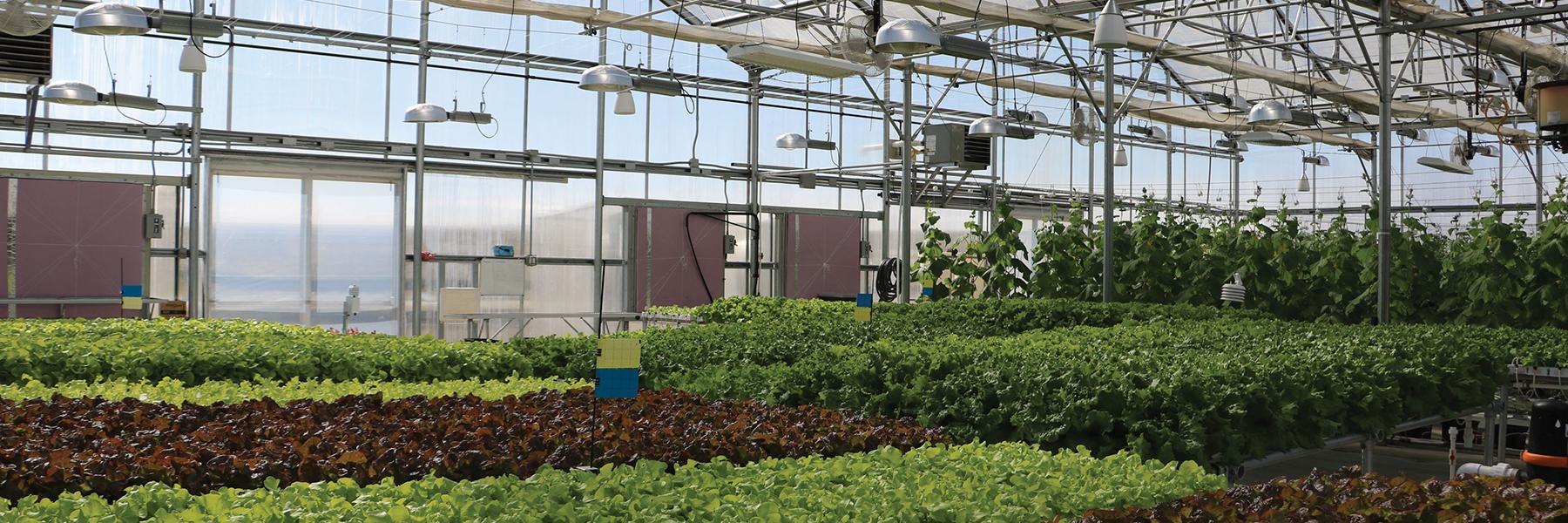 Interior Greenhouse with hydroponics
