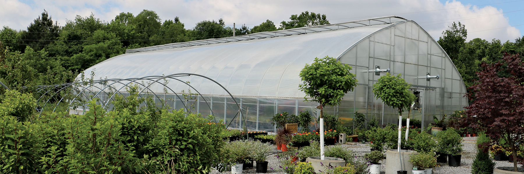 professional greenhouse farm