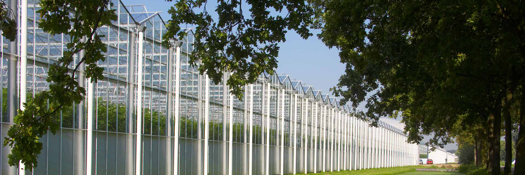 Venlo Greenhouse Row