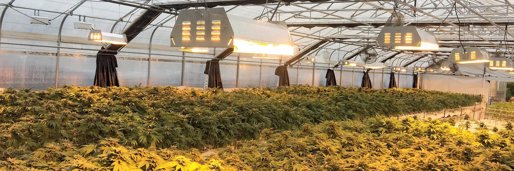 Greener Cannabis Cultivation