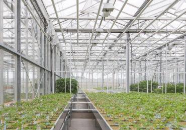 GrowSpan Venlo Glass Greenhouse